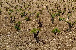 Marketing Online Rioja