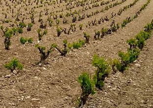 Posicionamiento SEO Rioja
