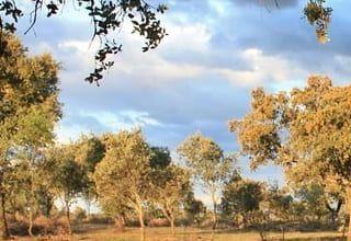 SEO Extremadura